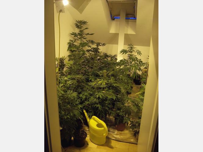 37 marihuana pflanzen in der wohnung rosenheim for Wohnung pflanzen