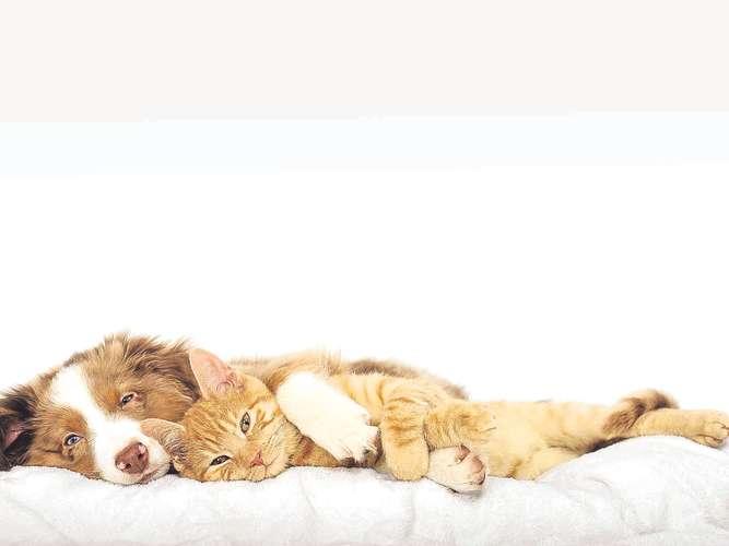 allseits beliebter hund darf bleiben wirtschaft. Black Bedroom Furniture Sets. Home Design Ideas