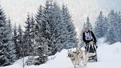 Top-Musher der Region sind am Start