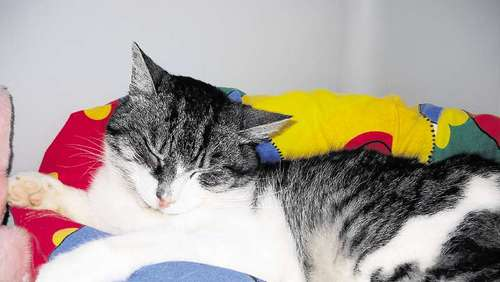 Kater sucht ruhiges Zuhause