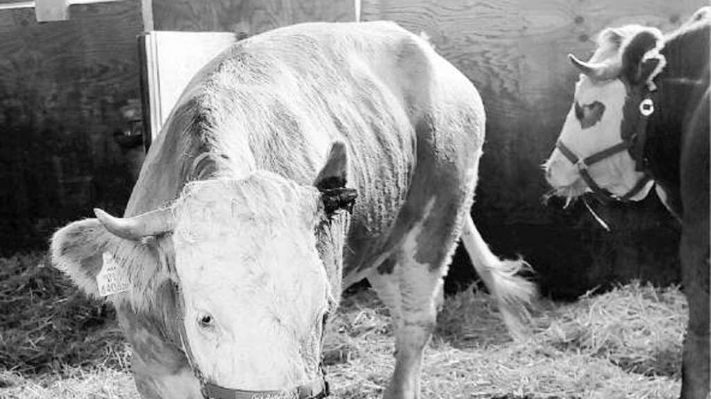 Bauer als kuh flüsterer leserbriefe