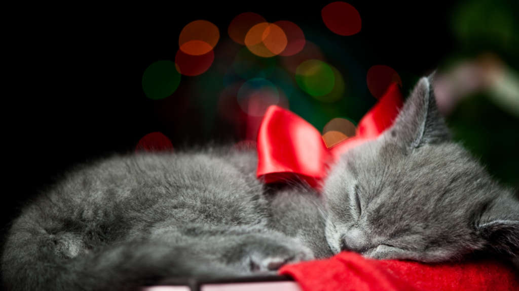 Bilder Weihnachten Tiere.Tiere Zu Weihnachten Erst Denken Dann Schenken Rosenheim Stadt