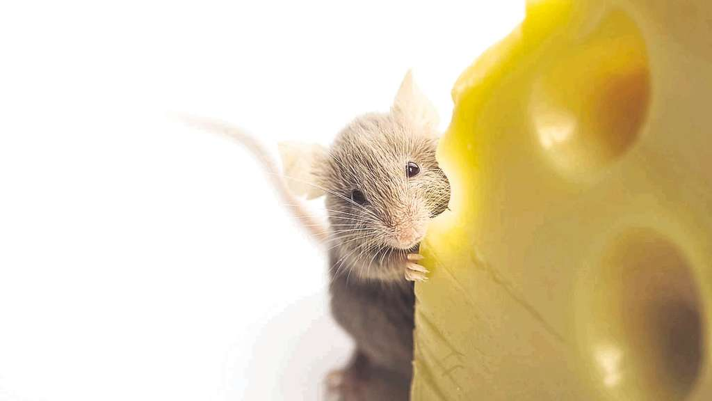 Mit Speck Fängt Man Nicht Jede Maus Wirtschaft