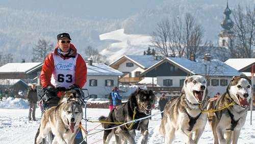 Top-Musher am Start