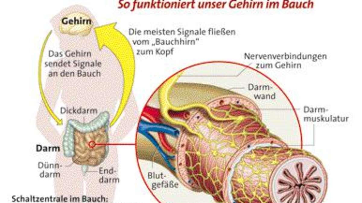 Bauchhirn
