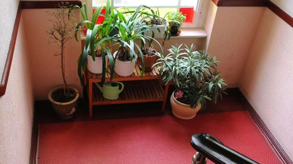 f r pflanzen berwinterung im hausflur genehmigung holen wohnen. Black Bedroom Furniture Sets. Home Design Ideas