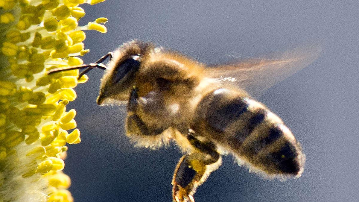 Rettet Die Bienen Pro Und Contra