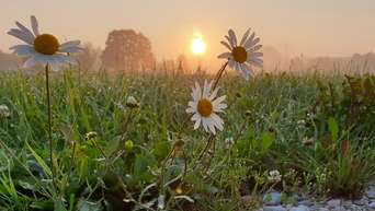 Guten Morgen Auf Der Kippe Von Sommer Zu Herbst Rosenheim
