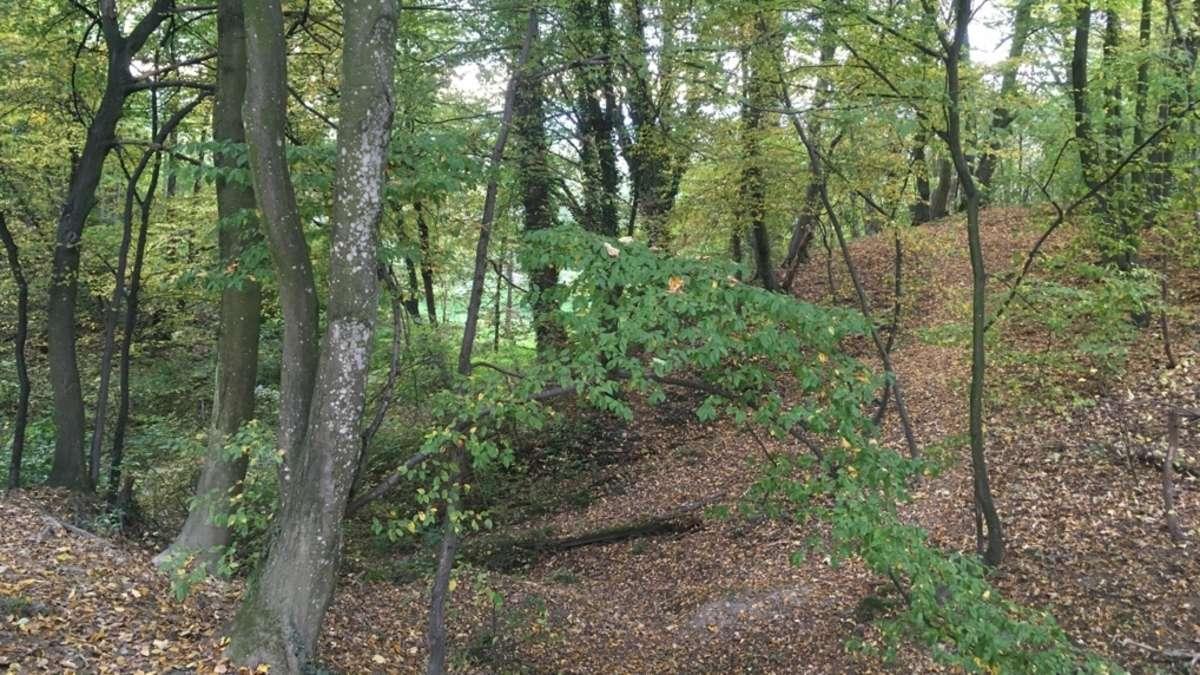 Waldkindergarten: Gemeinderat Stephanskirchen entscheidet über Standort und Träger - Oberbayerisches Volksblatt